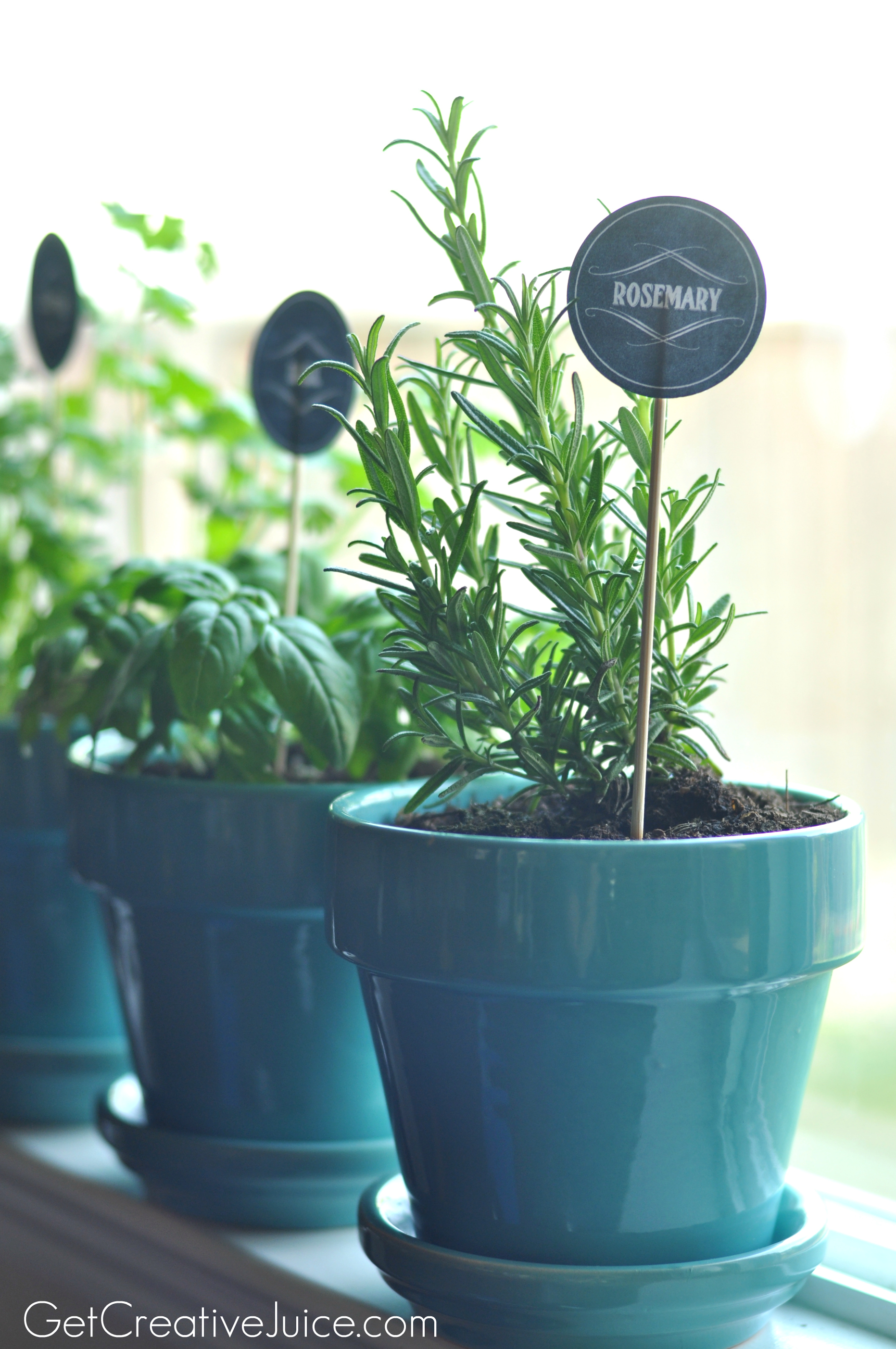 Indoor Kitchen Gardens Tips And Tricks To Maintaining An Indoor Kitchen Herb Garden