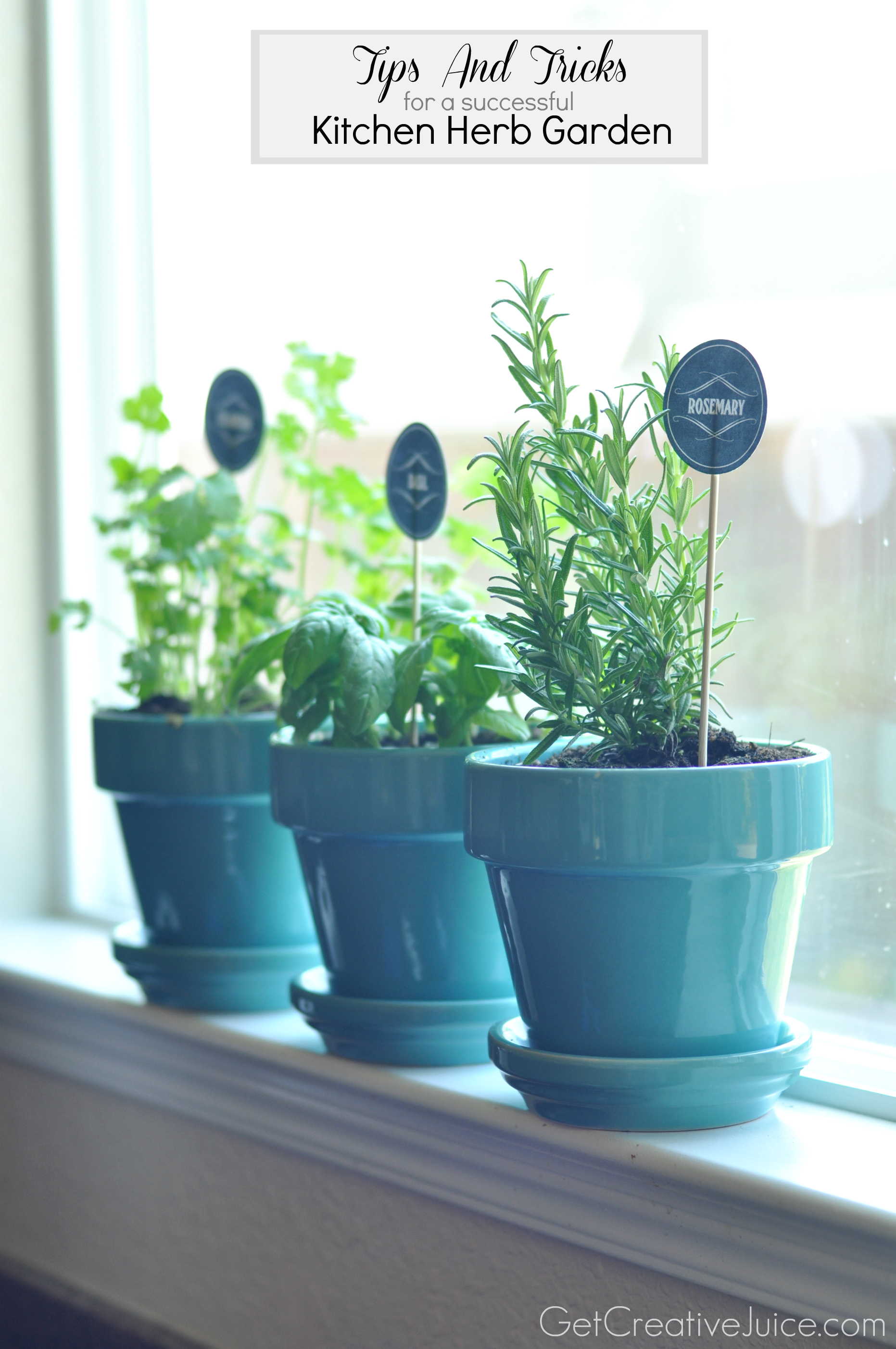Tips and tricks to maintaining an indoor kitchen herb for Kitchen herb garden