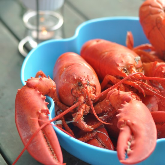 Crustacean Vacation – Maine